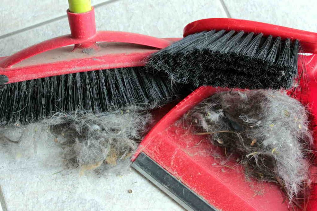 El aspirador escoge recoge mejor las pelusas