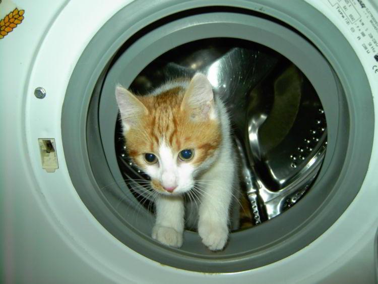 Sustituir la goma de la lavadora es muy sencillo