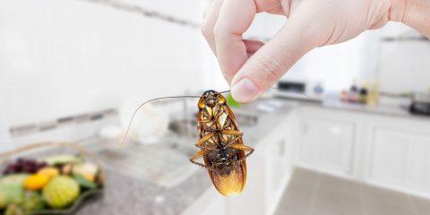 Las cucarachas de tu lavavajillas