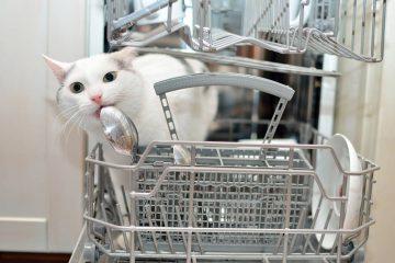 sal en el lavavajillas